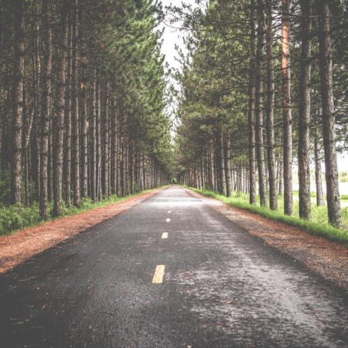 street in woods